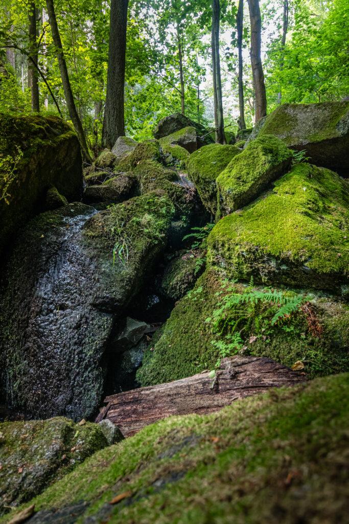 Zdjęcie skał w lesie autorstwa Milana Vokaty